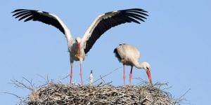 Långa relationer Lilla Stork